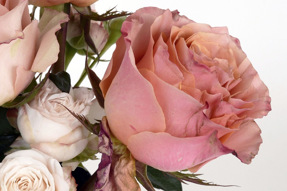 Roses, Salmon, Rose Bloom, Flower, Romantic, Love
