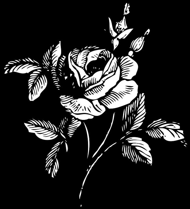 Rose, Black And White, Floral, Bloom, Blossom, Stem