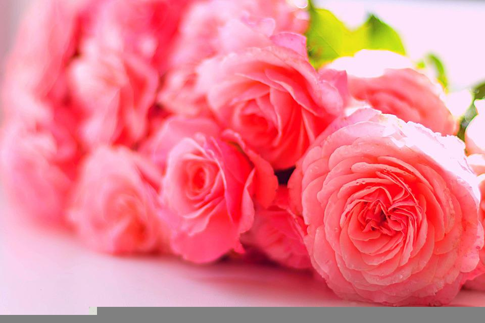 Pink, Roses, Flowers, Bouquet, Rose, Rose Paper Flower