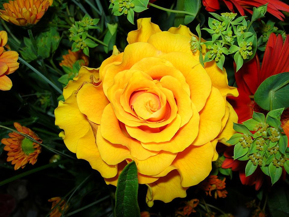 Free photo rose close bloom flower yellow max pixel rose yellow flower bloom close mightylinksfo Gallery