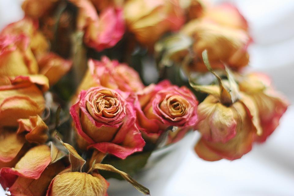 Flower, Garden, Rose