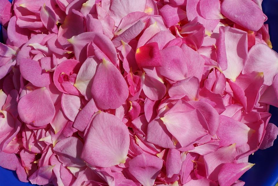 Rose Petals, Roses, Rose Flower
