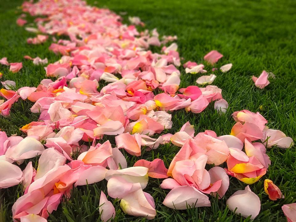Flower, Nature, Garden, Leaf, Flora, Petals, Rose