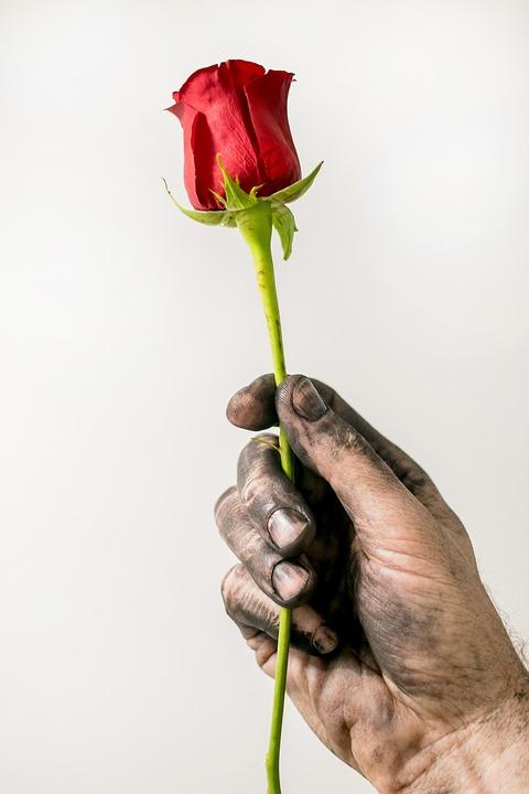 Rose, Hand, Dirty Hand, Love, Red, Flower, Petals