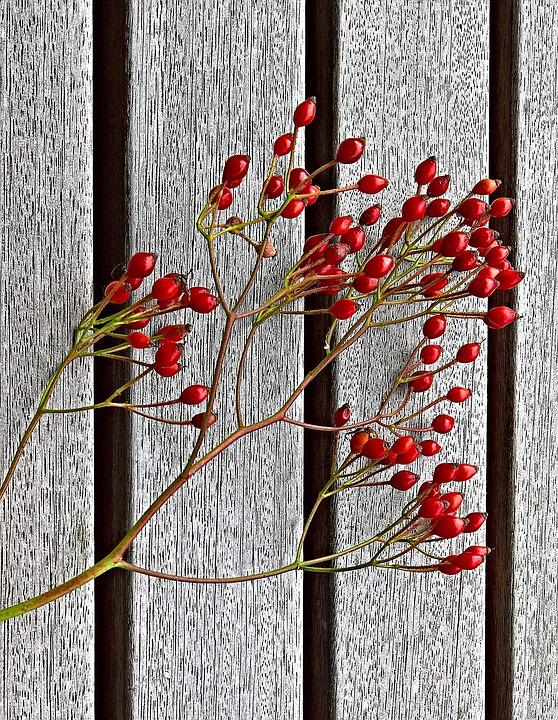 Rose Hip, Dog Rose, Fruits, Red, Small, Ripe, Edible