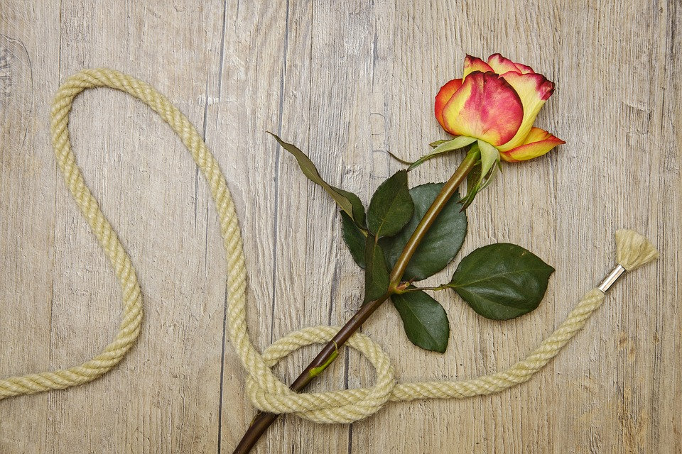 Rose, Love, Connection, Connected, Knot, Romance