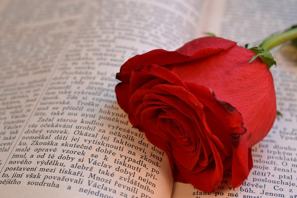 Book, Rose, Open Book