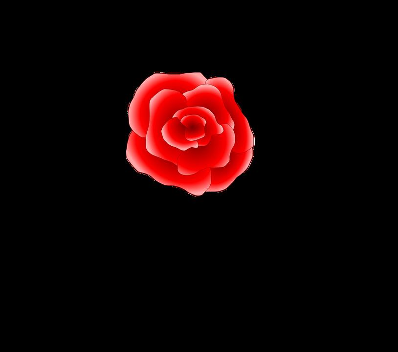 Red, Rose, Flower, Patterns, Black, Designs, Floral