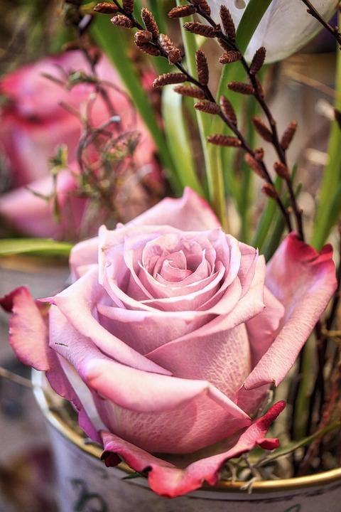 Flower, Rose, Plant, Petal, Floral, Arrangement, Petals