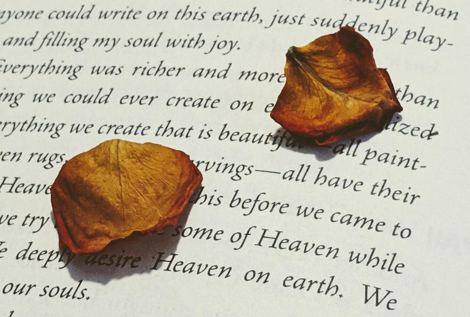 Rose Petals, Dried Rose Petals, Book, Rose, Red Rose