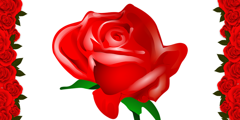 Rose, Rose Illustration, Rose Drawing, Rose Picture