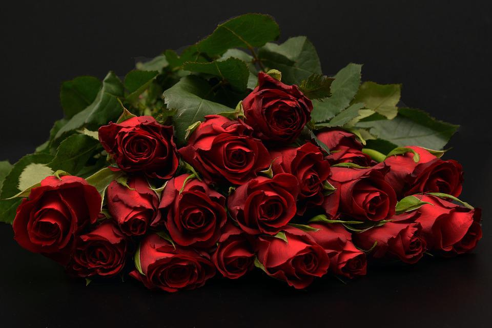 Free photo Rose Red Roses Red Bouquet Of Roses Red Roses - Max Pixel