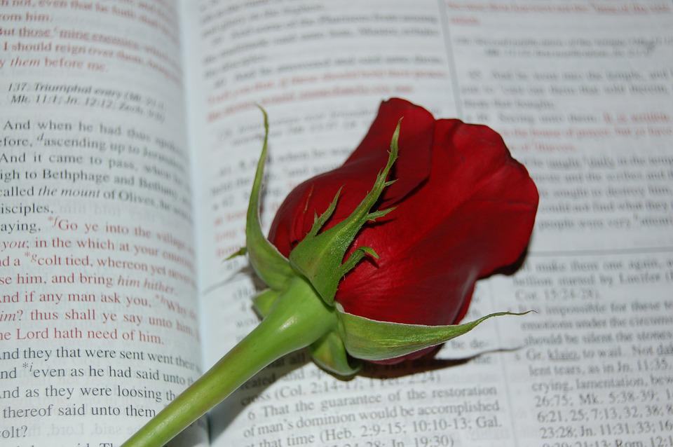 Rose, Bible, Words, Religion, Book, Christianity