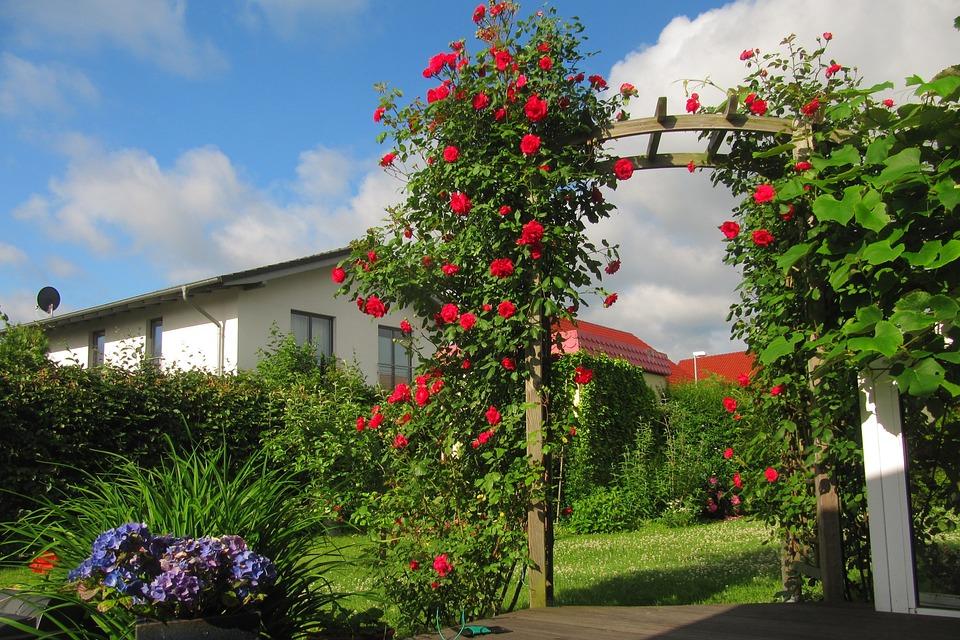 Rose Arch, Rose, Terrace, Clouds