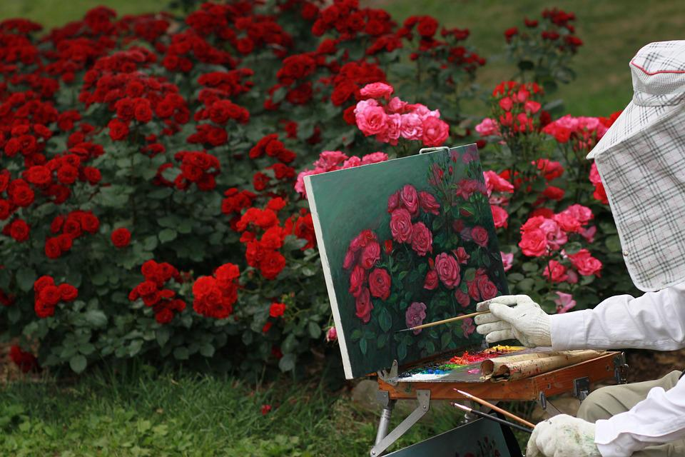 Rose, Flowers, Red Rose, Rose Garden, Nature, Tabitha