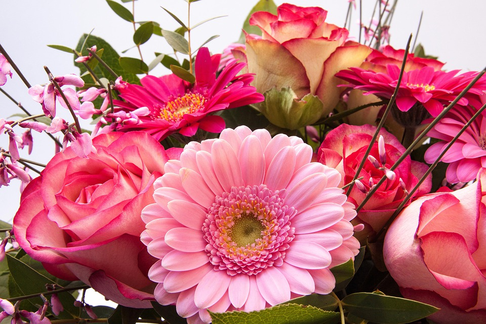 Roses, Gerbera, Composites, Broom, Genista, Flowers