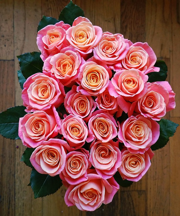 Miss Piggy's, Roses, Flowers, Coral, Pink, Fragrant