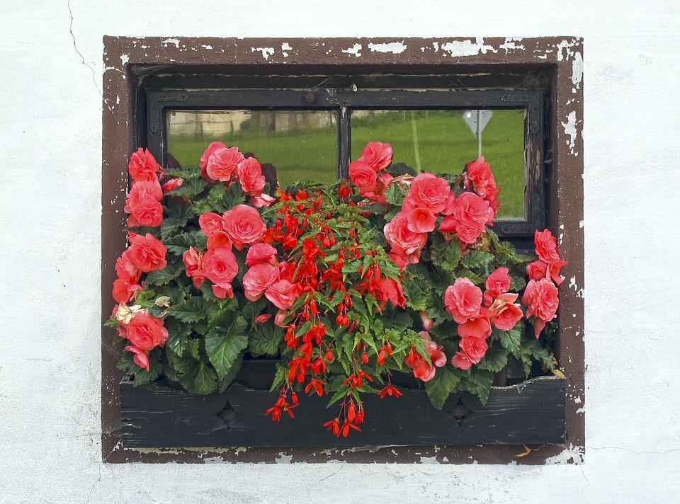 Window, Flower Box, Roses, Install Window, Flowers
