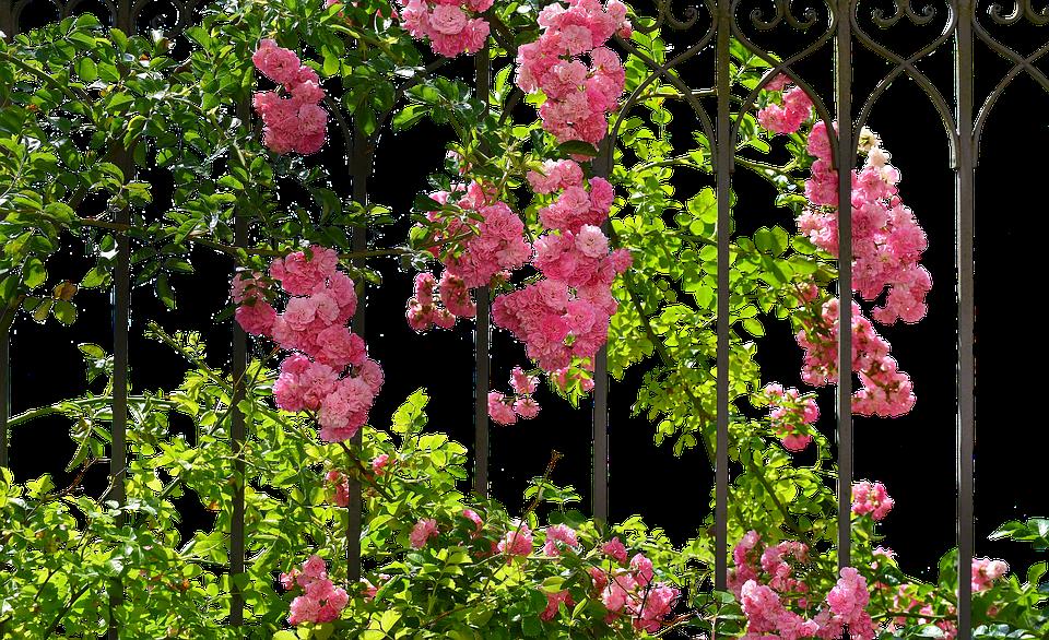 Roses, Romantic, Love, Rose Bloom, Blossom, Bloom