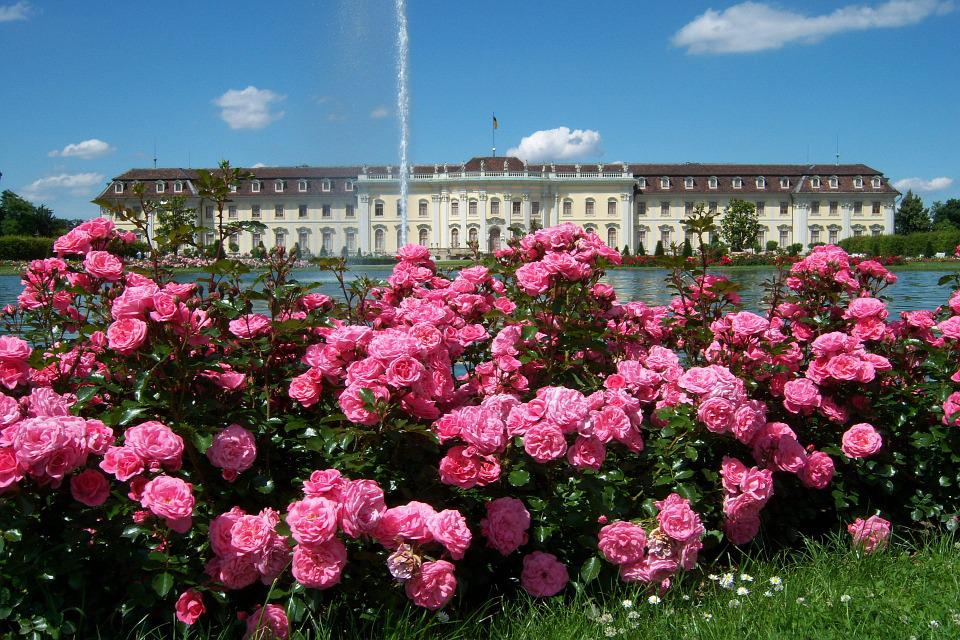 Roses, Park, Fountain, Flower, Palace, Architecture