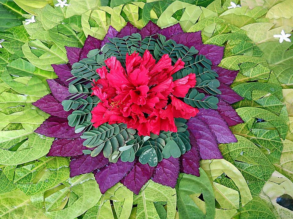 Flower, Leaves, Rosette, Plant Design, Color