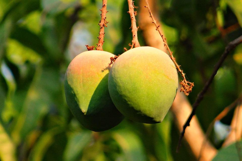 Mango, Rosy, Fruit, Attractive, Delicious, India