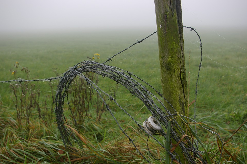 Barbed Wire, Pole, Rot, Hollow, Board, Meadow