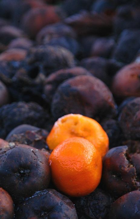Orange, Rotten Fruit