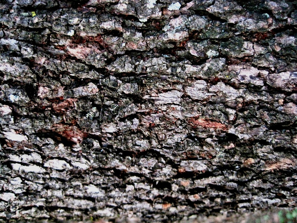 Bark, Tree, Rough, Textured, Patterned