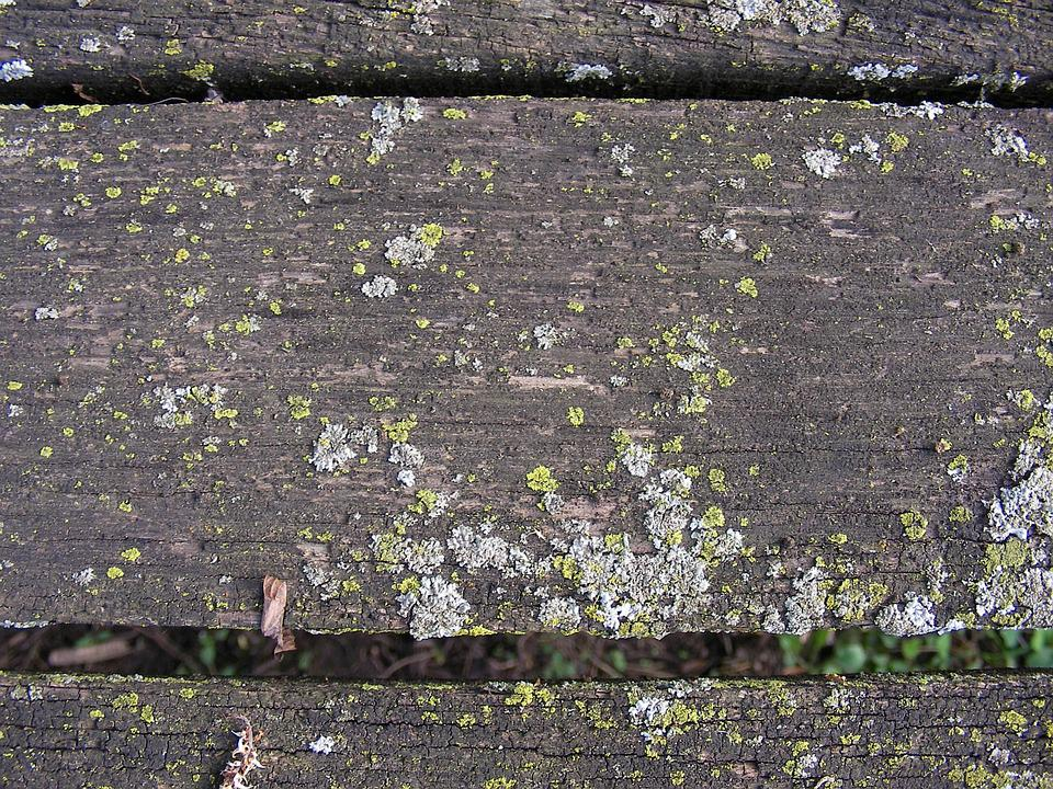 Weathered, Board, Moss, Wood, Plank, Old, Wooden, Rough