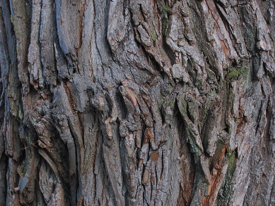 Tree, Bark, Nature, Park, Outdoor, Tree Trunk, Rough