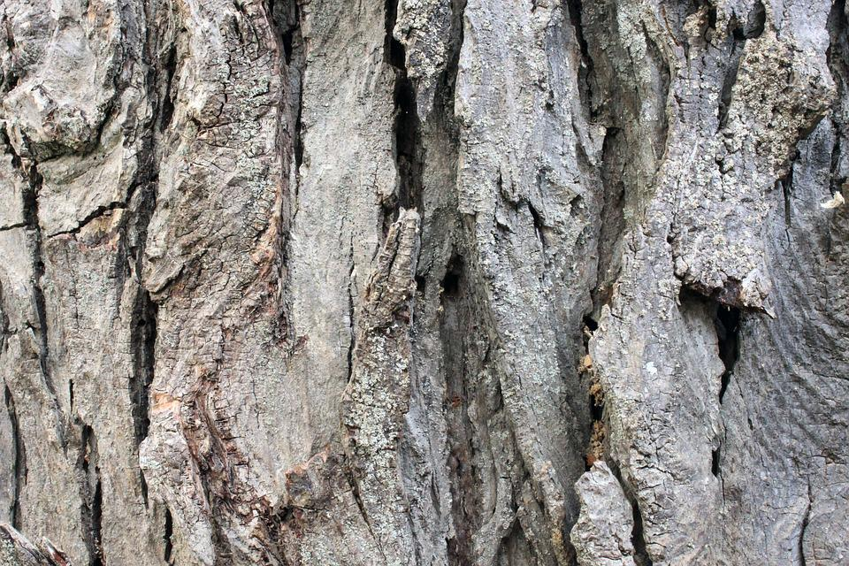 Tree, Old, Bark, Timber, Rough, Background, Texture