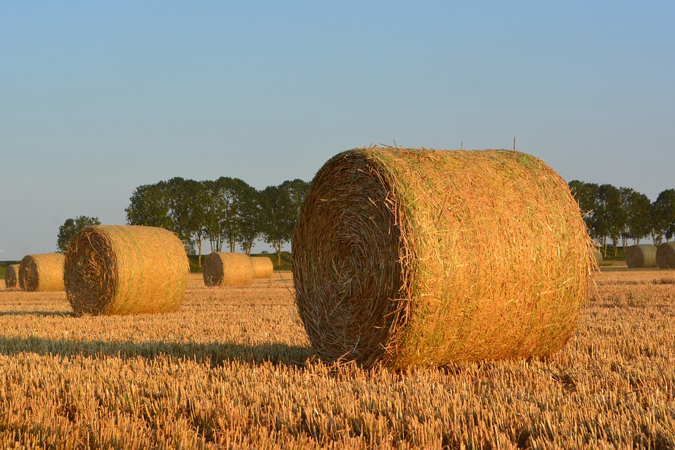 Straw Bales, Round Bales, Harvest, Straw, Agriculture