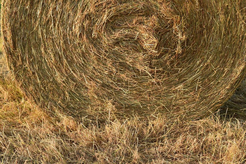 Hay, Hay Bales, Round Bales, Agriculture, Harvested