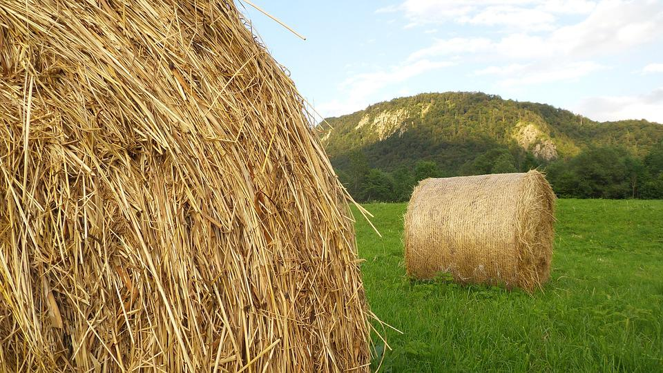 Hay, Hay Bales, Agriculture, Round Bales, Harvest