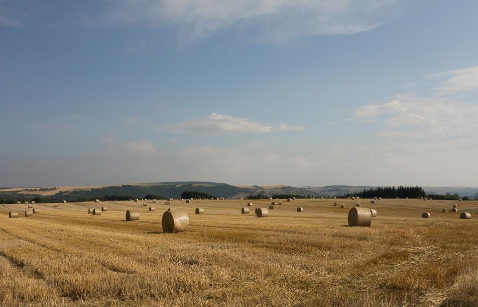 Straw Bales, Field, Meadow, Round Bales, Quadrant, Hay