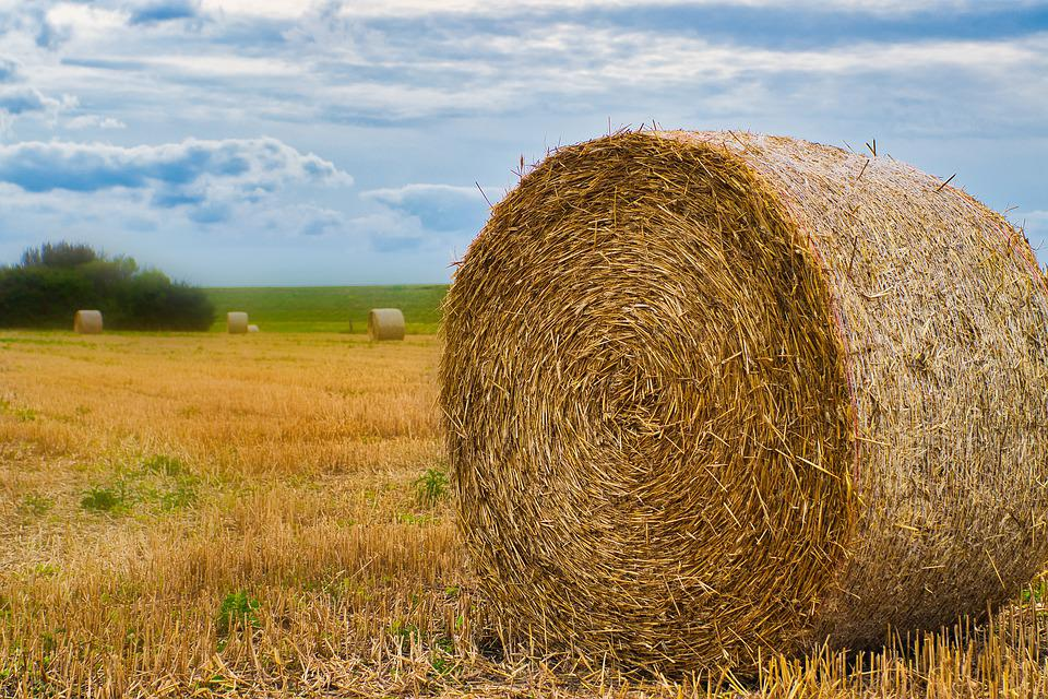 Field, Straw Role, Agriculture, Round Bales, Stubble