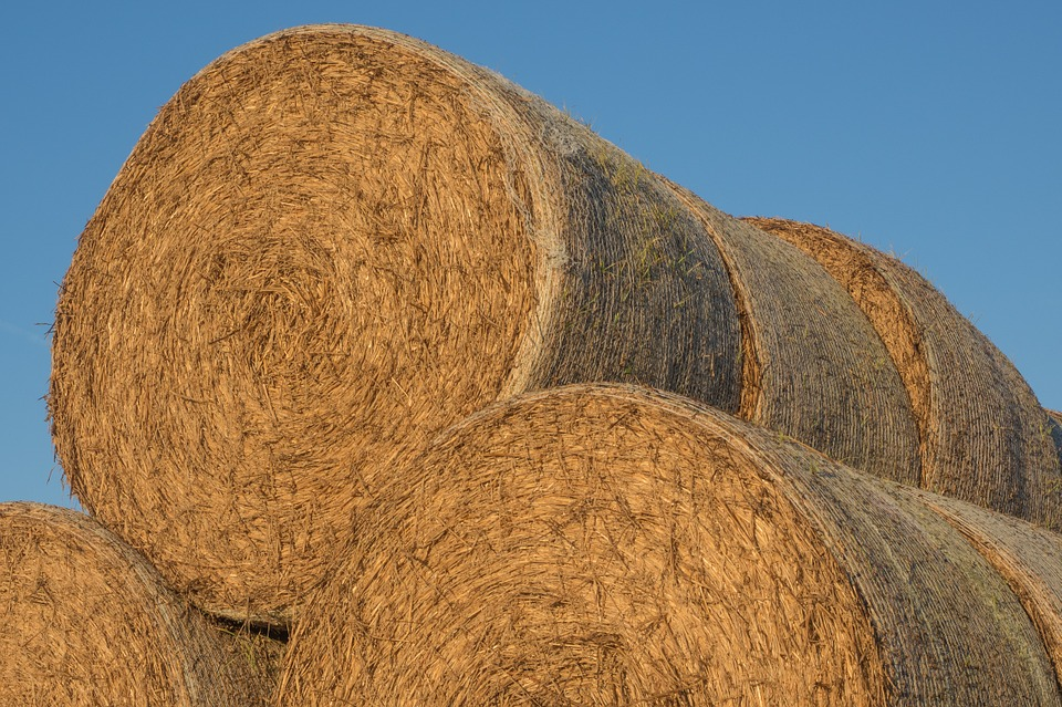 Straw, Straw Bales, Round Bales, Agriculture, Bale