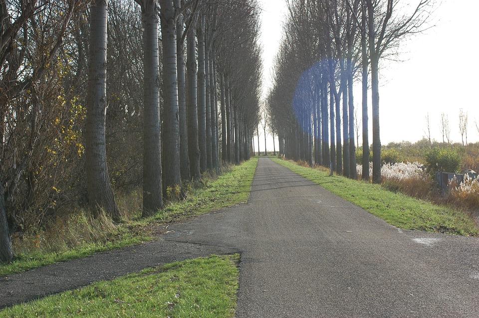 Road, Trees, Row, Row Of Trees, Light, Sun, Grass