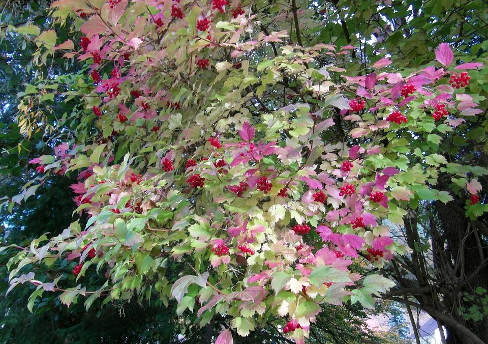 Rowan, Red, Autumn, Landscape, Mood, Fall Color, Emerge