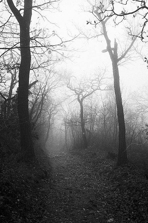 Free Photo Royalty Free Forest Eerie Trees Autumn Fog Mist Max Pixel