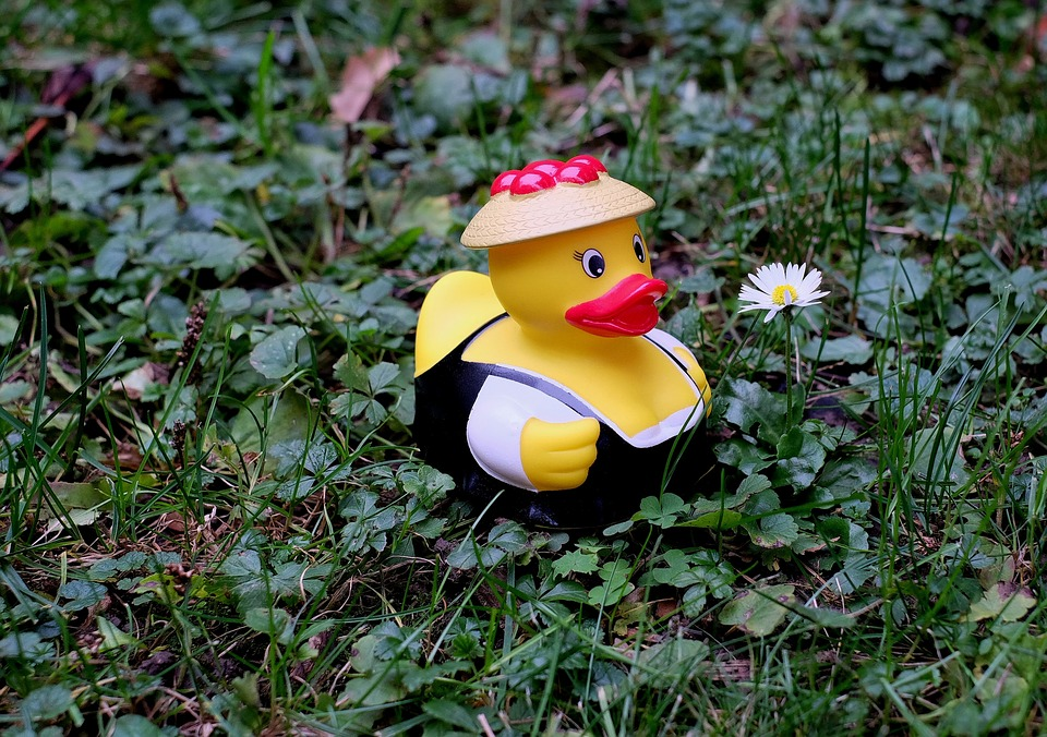 Duck, Rubber Duck, Costume, Black Forest, Funny