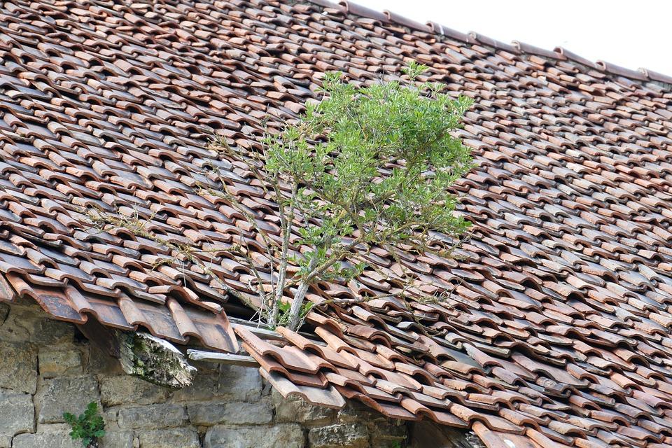 Ruin, Roof, Bäumchen, Brick, Lapsed