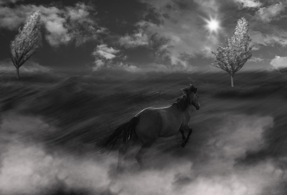 The Horse, Running, Pony, Lonely, Pasture Land, Animal