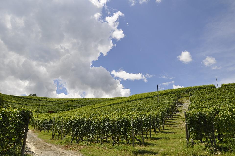 Landscape, Nature, Field, Sky, Rural Area, Vineyard