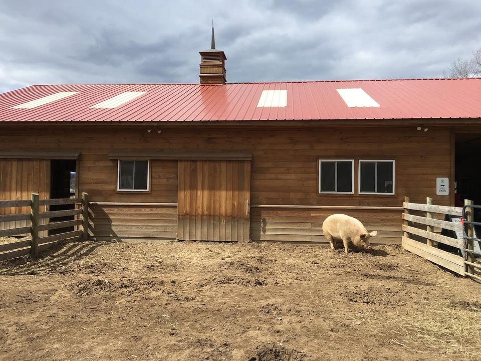 Pig, Barn, Farm, Agriculture, Fence, Rural, Farmland
