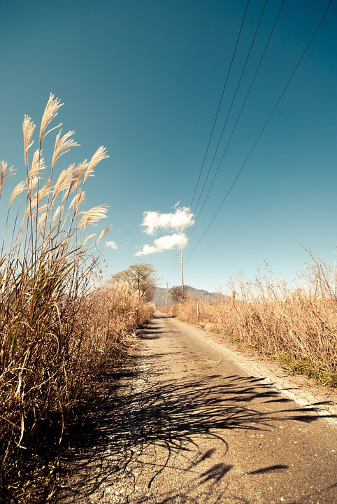 Road, Path, Pathway, Rural, Tall Grass, Sky, Blue