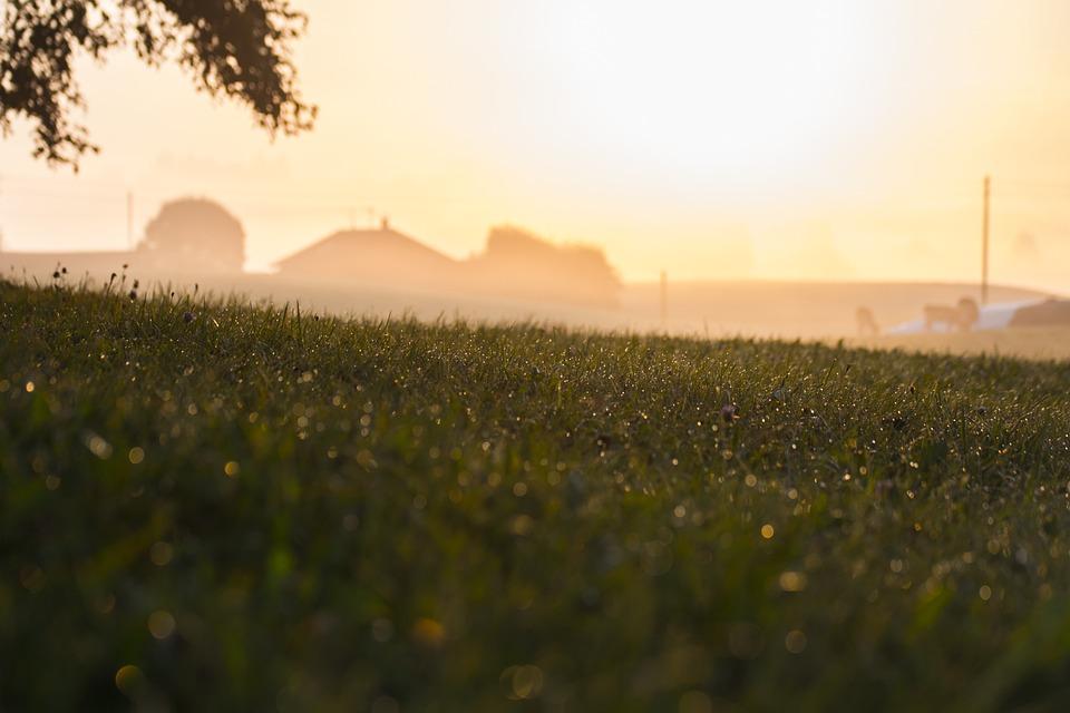 Rural, Morning, Field, Grass, Tree, Dew, Drops, Farmer