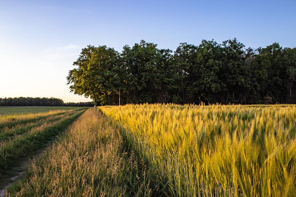 Field, Nature, Landscape, Spring, Rural
