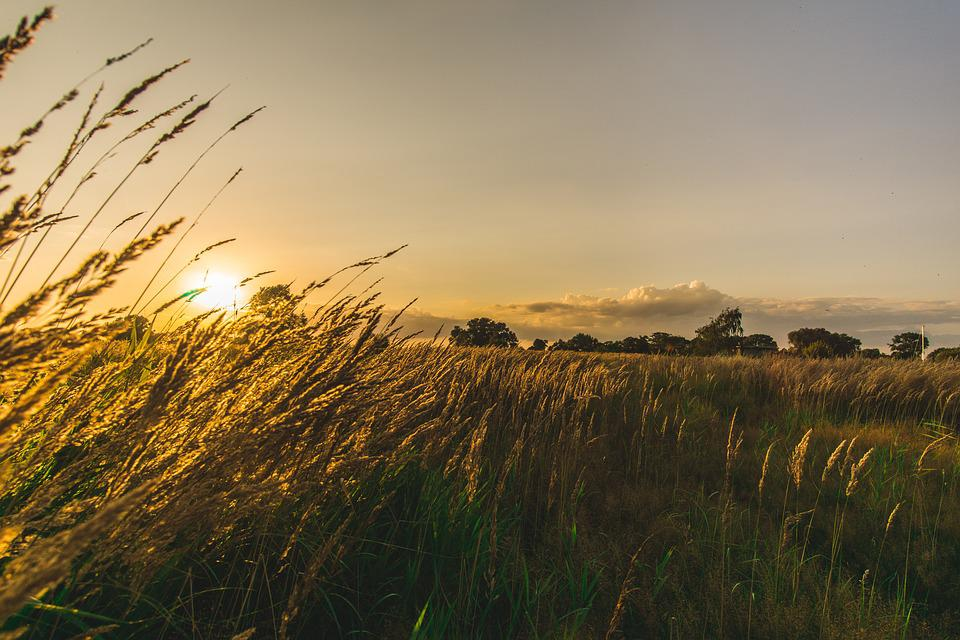 grass field sunset. Nature, Sunset, Grass, Sky, Rural, Sun, Field Grass Sunset S